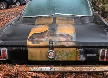 shelby mustang barnfind